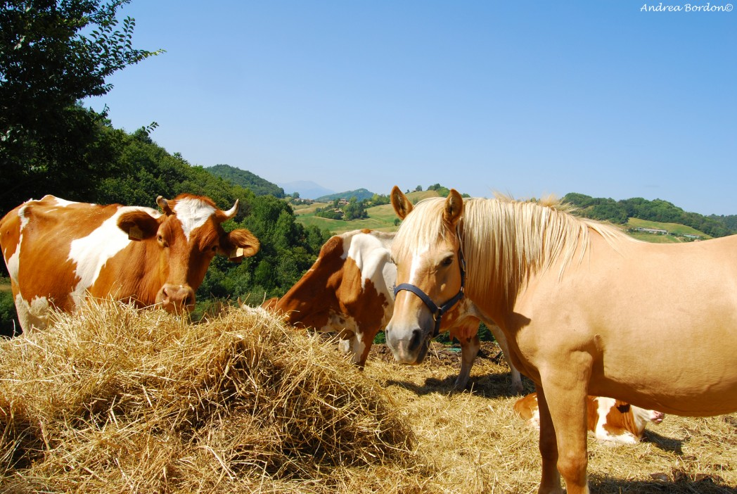 Il benessere animale for Planimetrie rustiche della fattoria