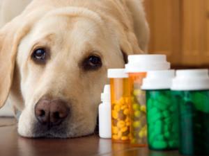 farmaco-veterinario