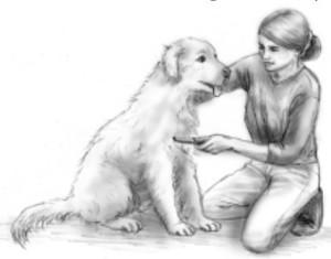cura del cane
