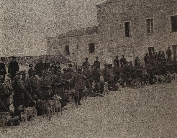 Porto di Cagliari, cani in partenza per la guerra in Libia, 1911