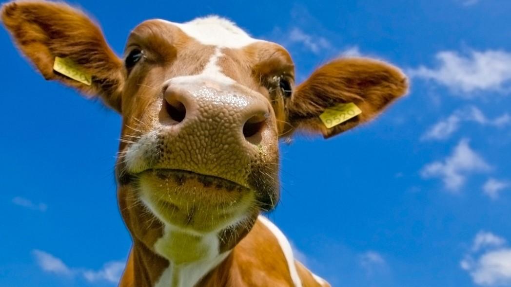 animali-da-fattoria
