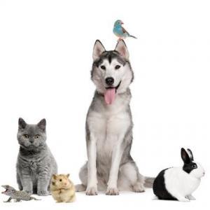 img_consigli_per_risparmiare_con_l_animale_domestico_14450_300_square