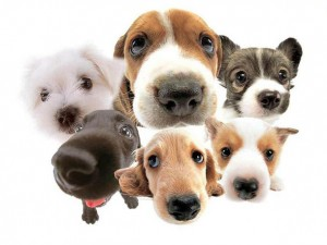 page_44393-dogs-cute-dogs-wallpaper