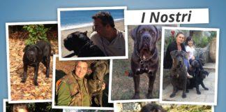 I nostri Cani <3