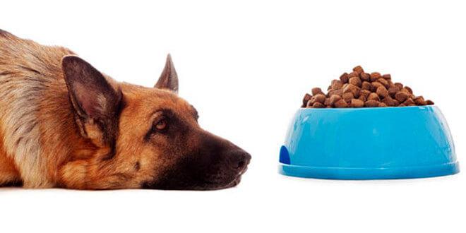 cane non mangia