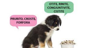 cibo per cani intolleranti